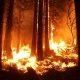 ... (Regen-) Wälder abbrennen und CO2 ausstoßen